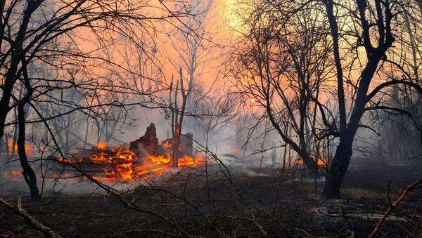 Лесной пожар в Чернобыльской зоне  - Sputnik Mundo