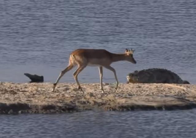 Una inusual batalla salvaje en un lago sudafricano