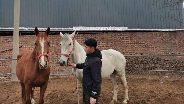 Clonan un caballo en China - Sputnik Mundo