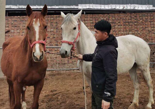 Clonan un caballo en China