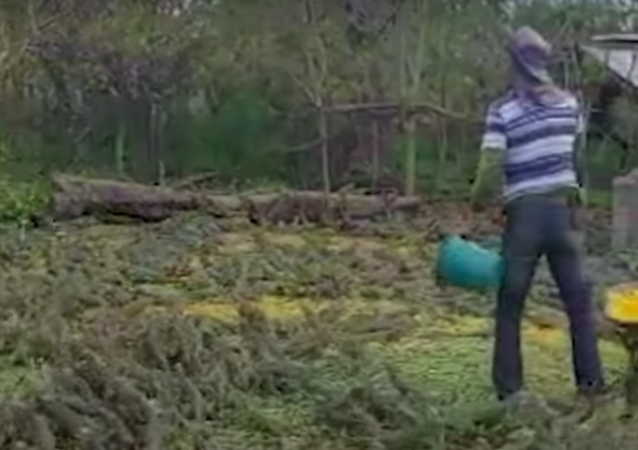 Es hora de comer: cientos de iguanas hambrientas rodean a una persona
