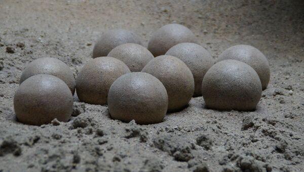 Huevos de dinosaurio (imagen referencial) - Sputnik Mundo