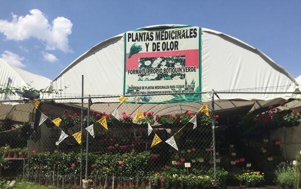 Plantas medicinales en los Viveros de Atlixco, en las faldas del volcán Popocatépetl - Sputnik Mundo