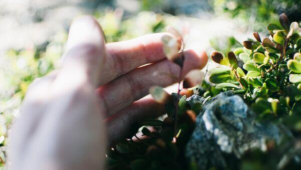 Una mano tocando flores (imagen referencial) - Sputnik Mundo