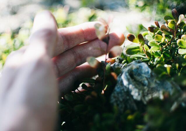 Una mano tocando flores (imagen referencial)