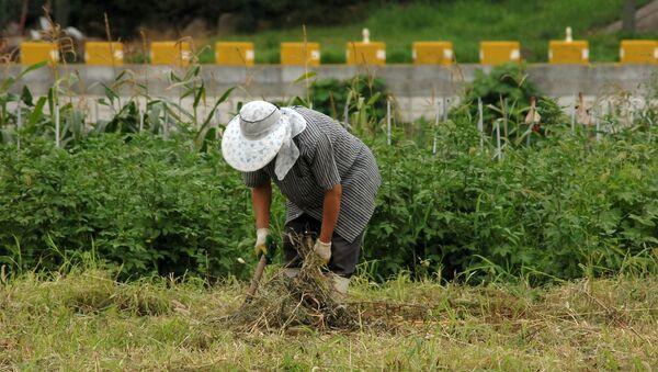 Un granjero. Campesino. Imagen referencial - Sputnik Mundo