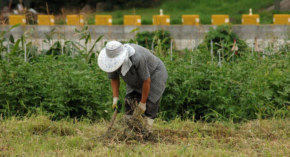 Un granjero. Campesino. Imagen referencial
