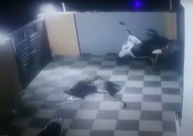 Un perro se resiste a un leopardo en una casa de la India