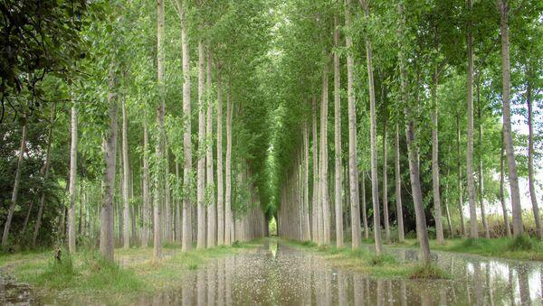 Árboles cerca del río Ebro (imagen referencial) - Sputnik Mundo