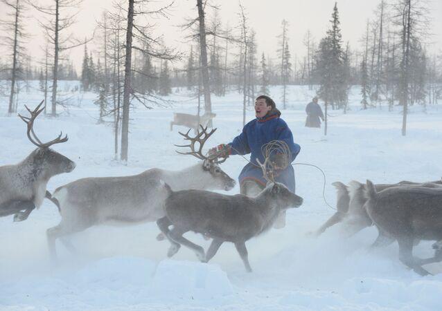 Un pastor de renos de la península de Yamal, Rusia (archivo)