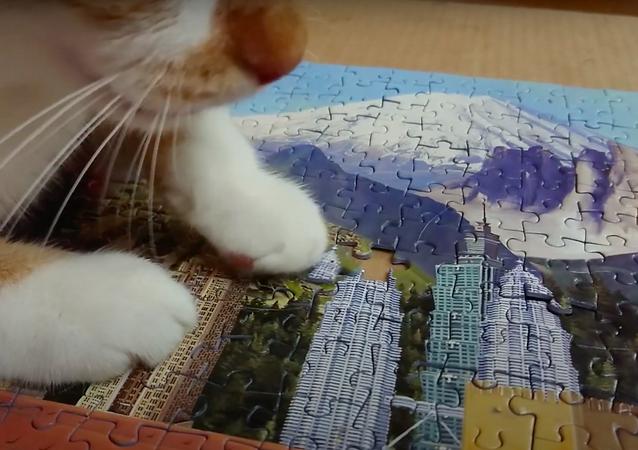 Un gatito ciego agrega la última pieza a un enorme rompecabezas