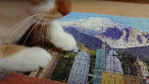 Un gatito ciego agrega la última pieza a un enorme rompecabezas  - Sputnik Mundo
