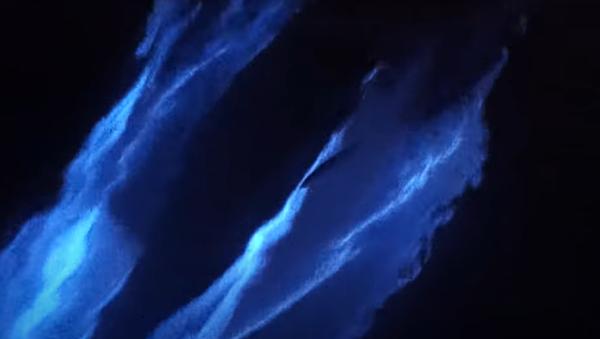 Filman a unos delfines rodeados de una mágica luz fluorescente - Sputnik Mundo