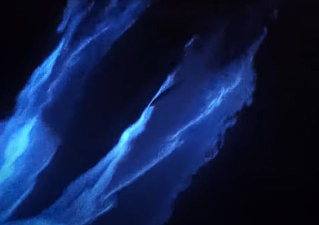 Filman a unos delfines rodeados de una mágica luz fluorescente