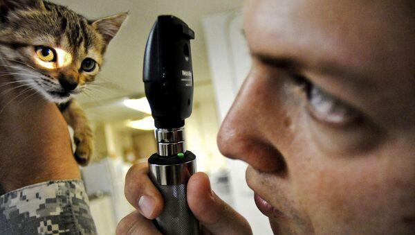 Un veterinario con un gato - Sputnik Mundo