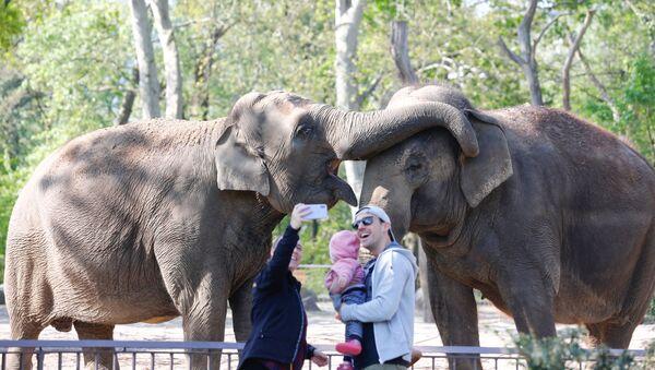 Una familia visita el zoológico de Berlín (Alemania) el día de su reapertura - Sputnik Mundo