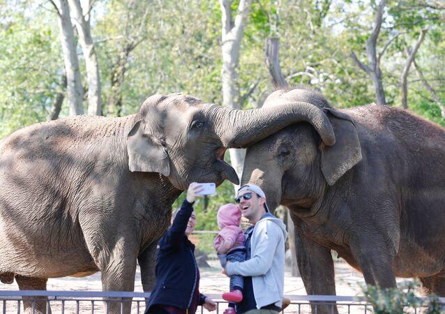 Una familia visita el zoológico de Berlín (Alemania) el día de su reapertura
