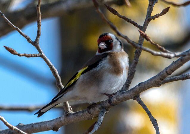 Un pájaro (imagen referencial)