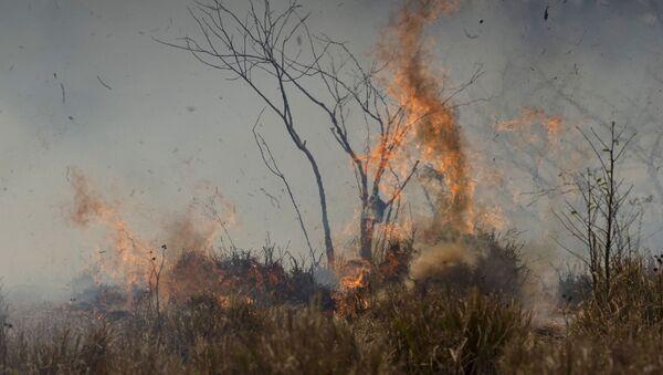 Incendio forestal en la Amazonía brasileña - Sputnik Mundo
