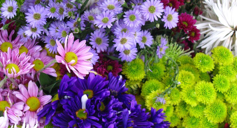 Flores en plena primavera (imagen referencial)