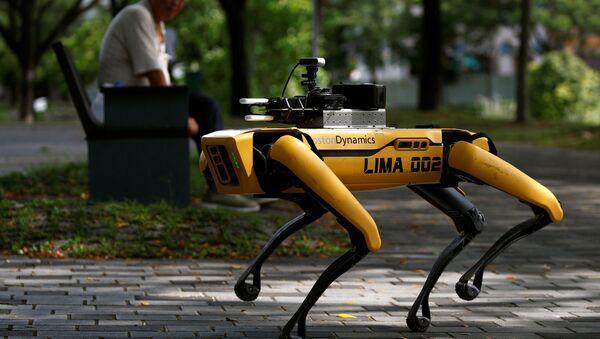 El perro robótico Spot patrulla un parque de Singapur - Sputnik Mundo