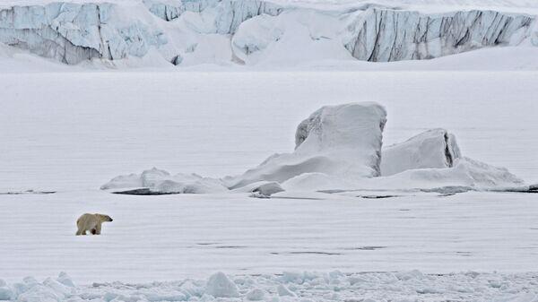 Un oso polar en un témpano de hielo en el Océano Ártico - Sputnik Mundo