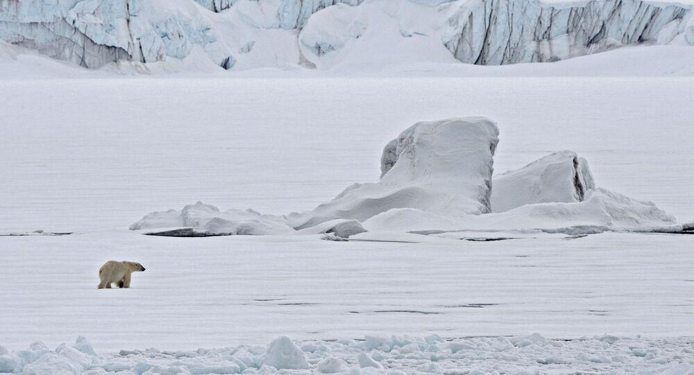 Un oso polar en un témpano de hielo en el Océano Ártico