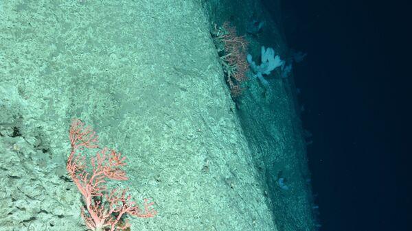Fondo del mar (imagen referencial) - Sputnik Mundo