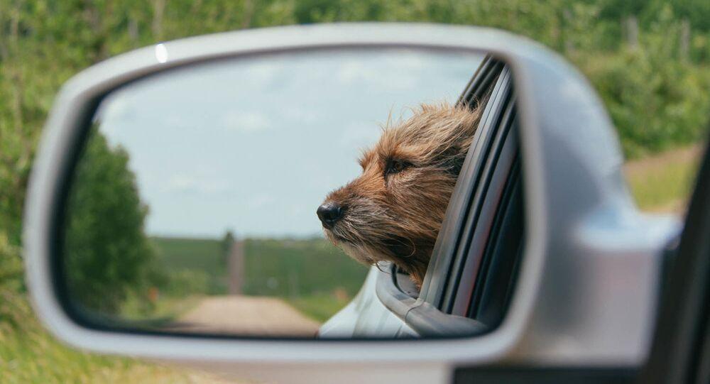 Un perro en un coche