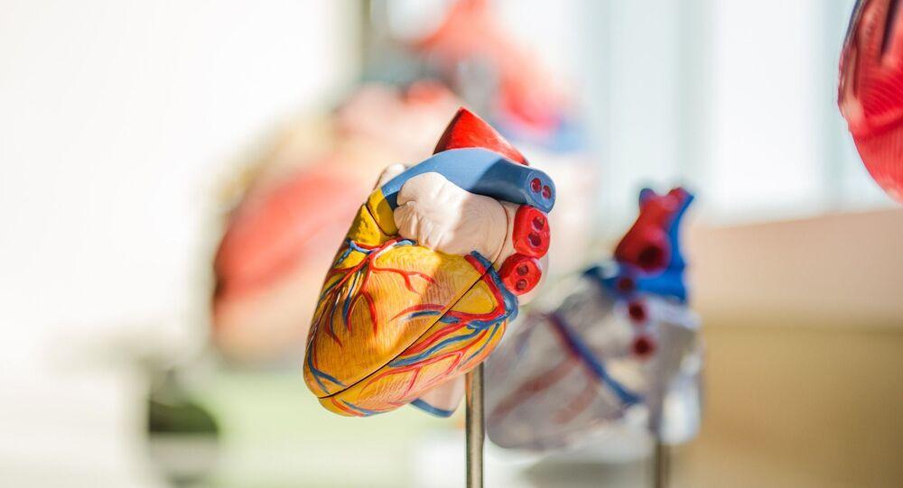 Modelo anatómico de un corazón. Imagen referencial