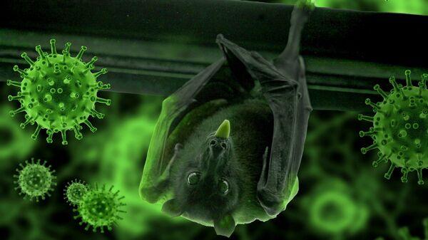 Murciélago y el coronavirus (imagen referencial) - Sputnik Mundo