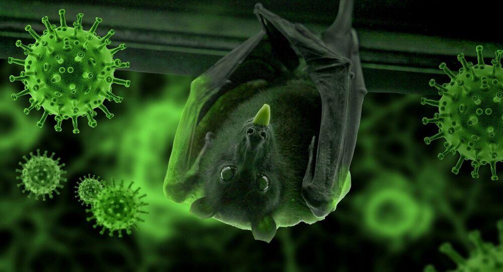 Murciélago y el coronavirus (imagen referencial)