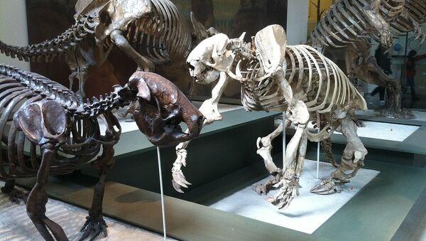 Esqueletos de varios perezosos terrestres  - Sputnik Mundo