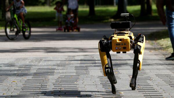 Perro robot en Singapur - Sputnik Mundo