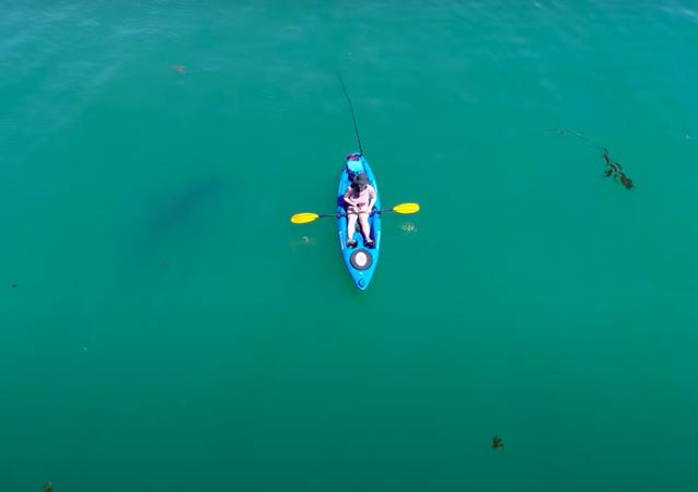 Salvado por el azar: un tiburón blanco le perdona la vida a un kayakista