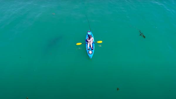 Salvado por el azar: un tiburón blanco le perdona la vida a un kayakista - Sputnik Mundo
