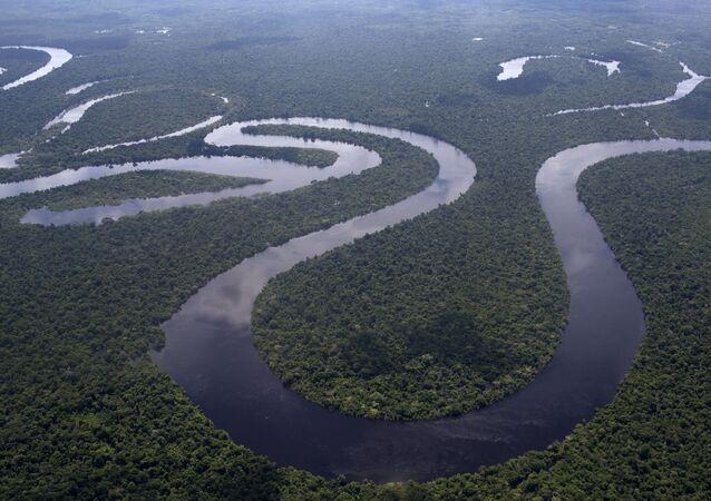 Selva amazónica de Perú cerca de la ciudad de Iquitos