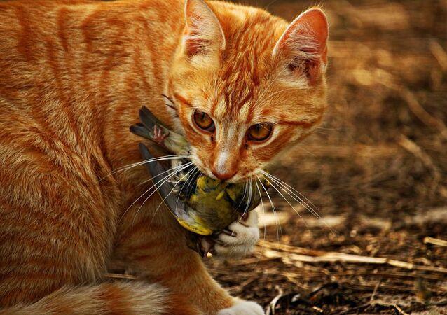 Un gato sostiene a un pajaro en su boca