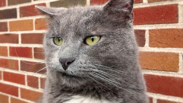 Gato enfadado, molesto, incómodo - Sputnik Mundo