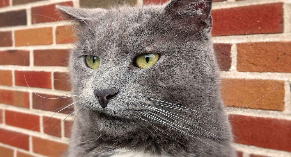 Gato enfadado, molesto, incómodo