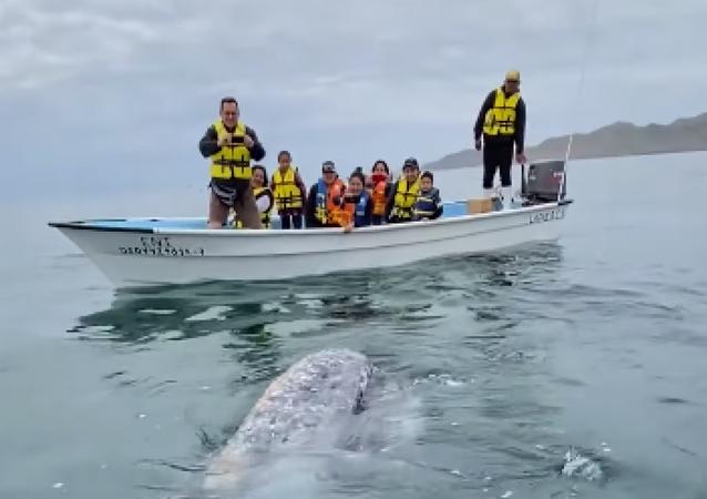 El tierno momento en el que unas amistosas ballenas se acercan a un bote