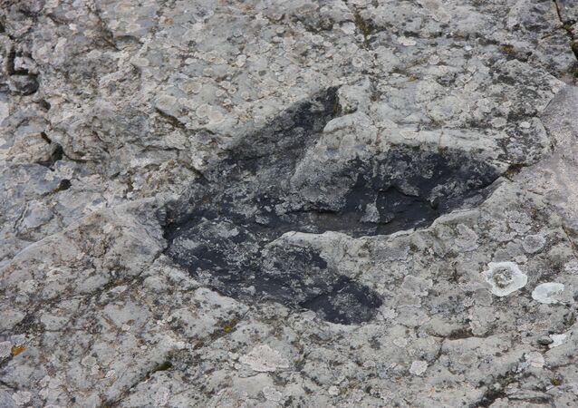 Huella de un dinosaurio (imagen referencial)