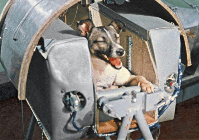 Laika, el primer ser vivo terrestre en orbitar la Tierra, durante una prueba en 1957
