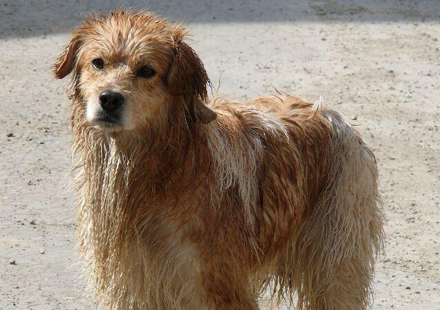 Un perro, foto de archivo