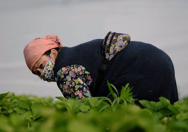 Una mujer trabaja en el campo (imagen referencial)