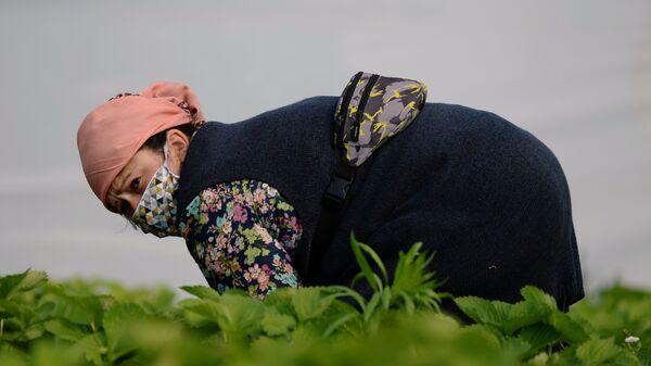 Una mujer trabaja en el campo (imagen referencial) - Sputnik Mundo