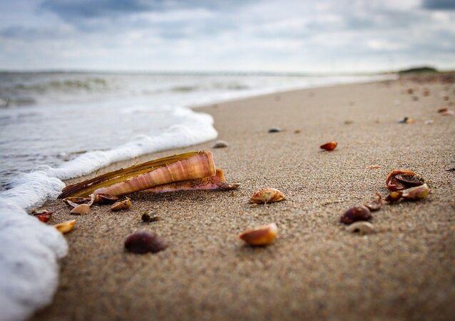 Los moluscos en una playa