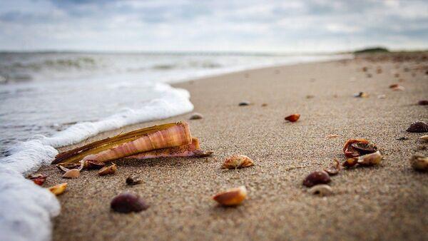 Los moluscos en una playa - Sputnik Mundo