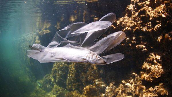 Un pez queda atrapado en un guante de plástico - Sputnik Mundo
