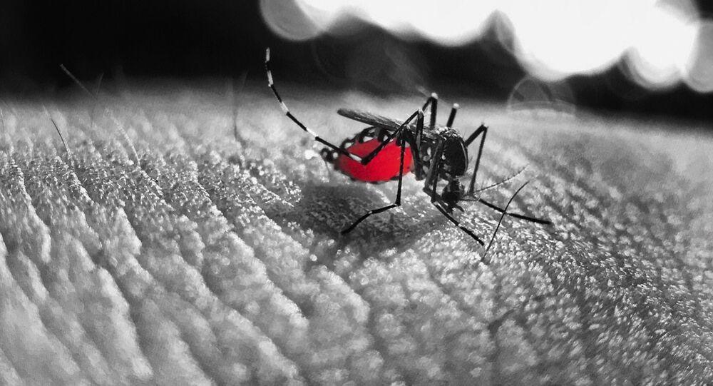 Un mosquito (imagen referencial)